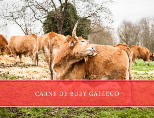 Carne de buey Gallego