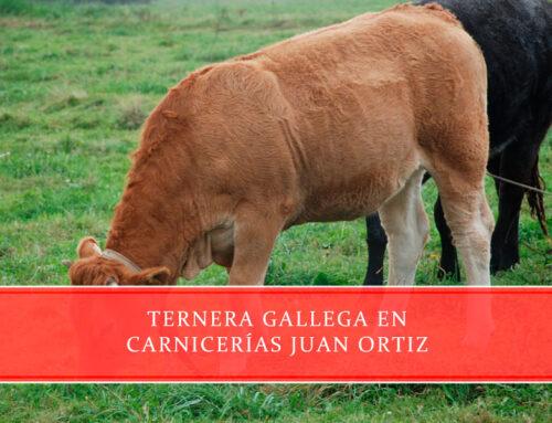 Ternera gallega en Carnicerías Juan Ortiz